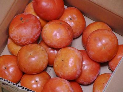 食べきれず赤く熟して来た柿