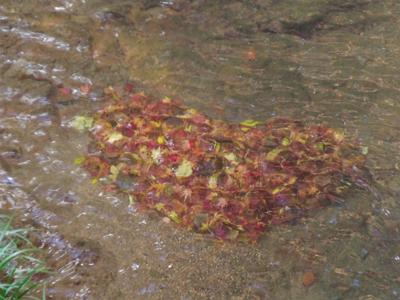 川底に積る落葉がハート型