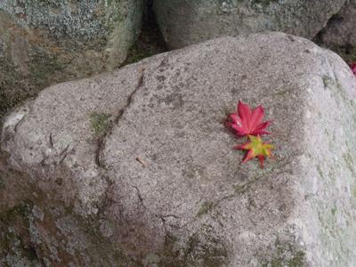 石の上のモジミ