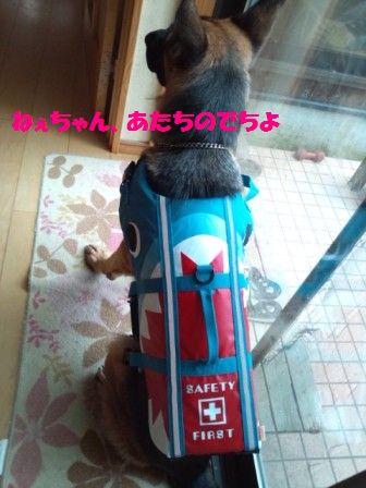 DSC_0181_20120825103740.jpg