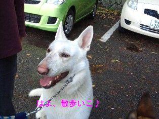 NEC_4950.jpg