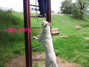 NEC_5263_20120507161334.jpg