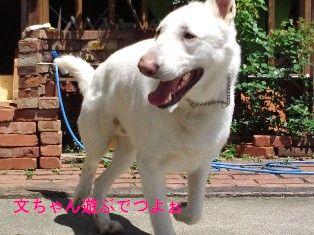 NEC_5274_20120507161330.jpg