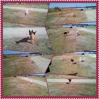 photoshake_1360507159632.jpg