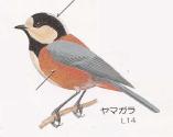 yamagara
