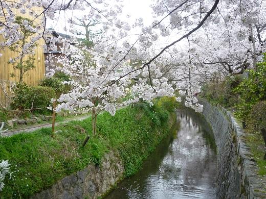 哲学の道・桜・2013.04.01