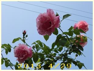 2013429remon.jpg