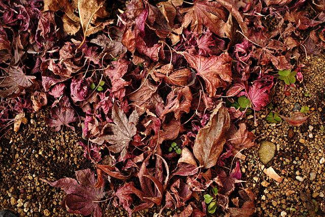 130106_001_庭の花