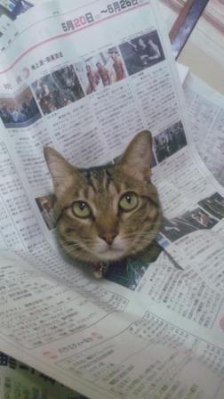 新聞からこんにちは