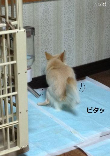 10_20121226161000.jpg