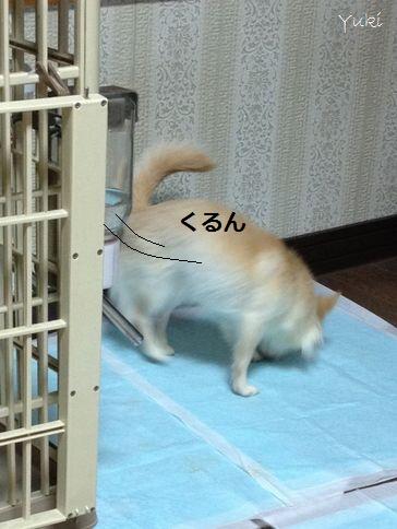 5_20121226161002.jpg