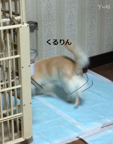 6_20121226161001.jpg