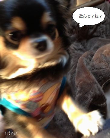 a1_20121227122902.jpg