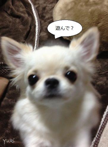 a2_20121210085046.jpg
