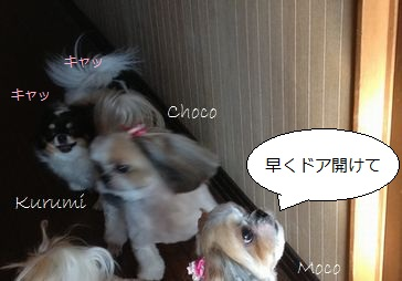 b2_20121219095932.jpg
