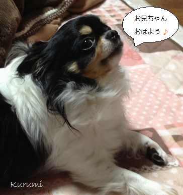 b2_20121228103605.jpg