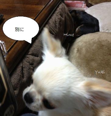b3_20130101204116.jpg