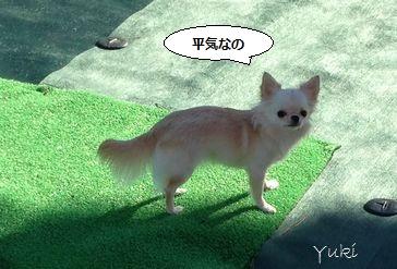 b5_20121212150129.jpg