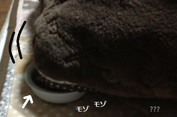d1_20121221221527.jpg