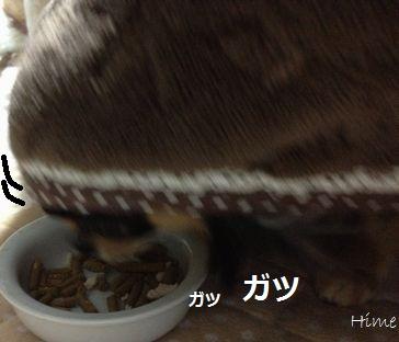 d3_20121221221526.jpg