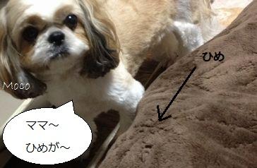 d4_20121221221526.jpg