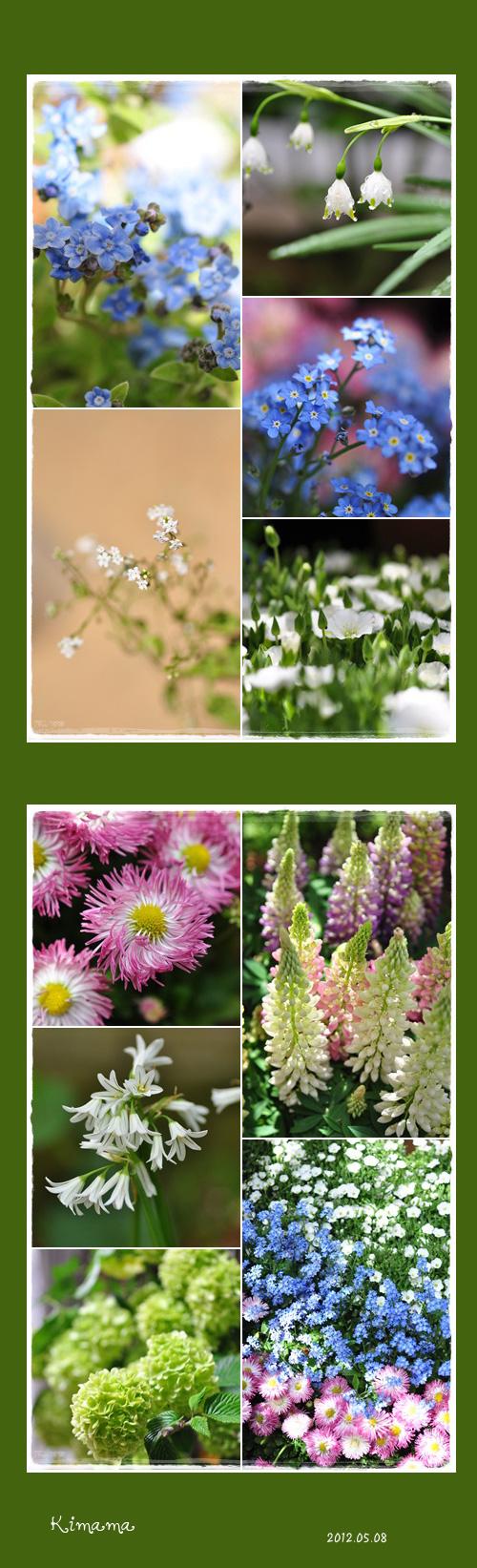5月8日庭の花3
