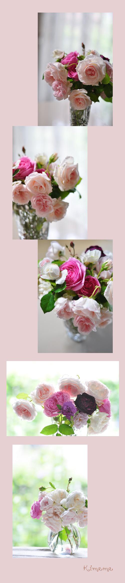 5月22日薔薇5
