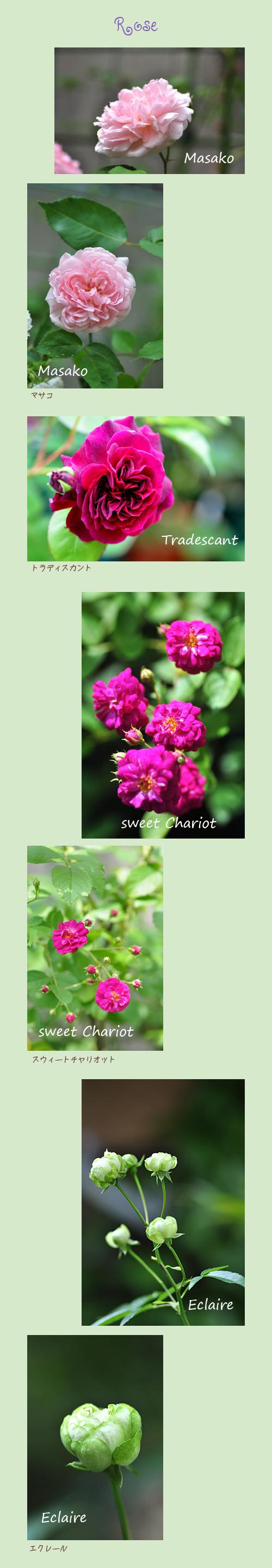 5月29日薔薇1