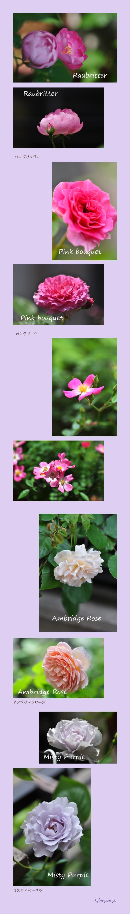 5月29日薔薇3
