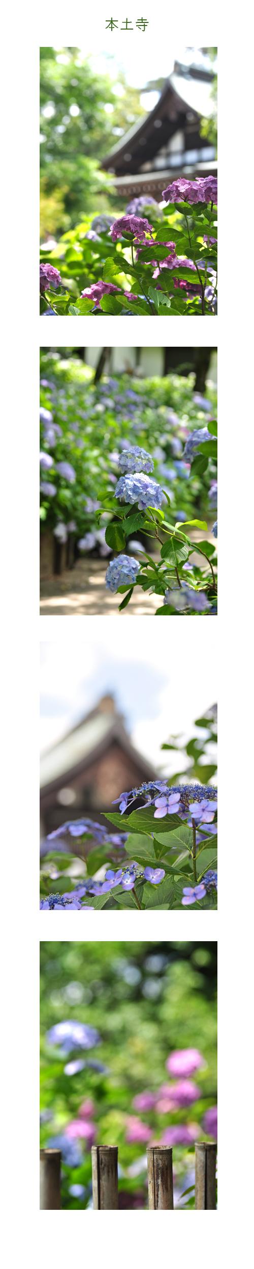 7月1日本土寺1
