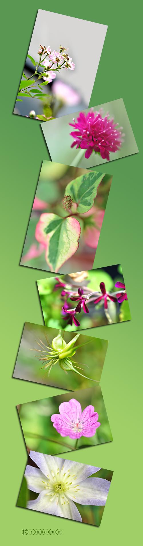 7月23日庭の花