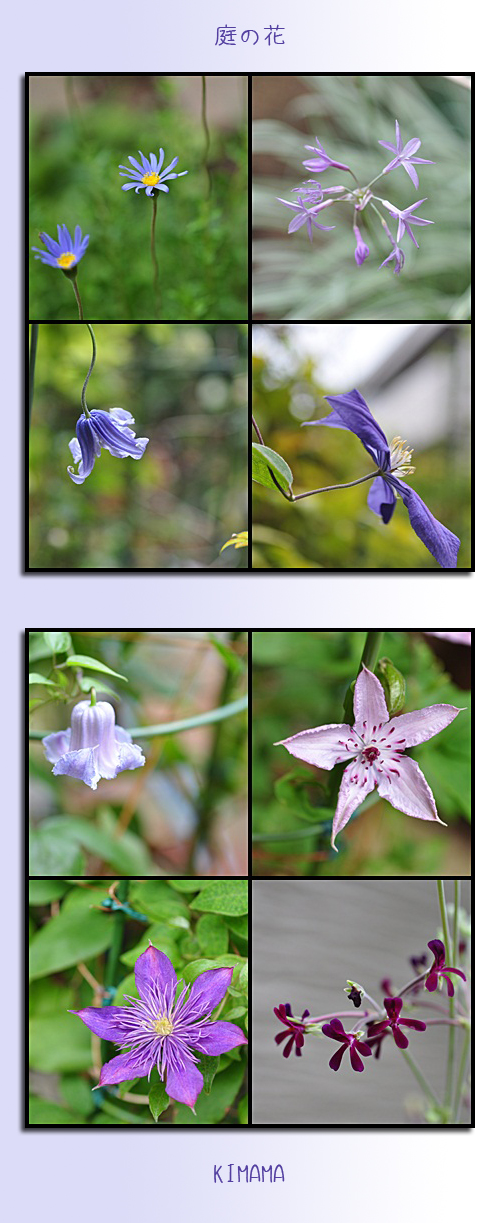 8月8日庭の花