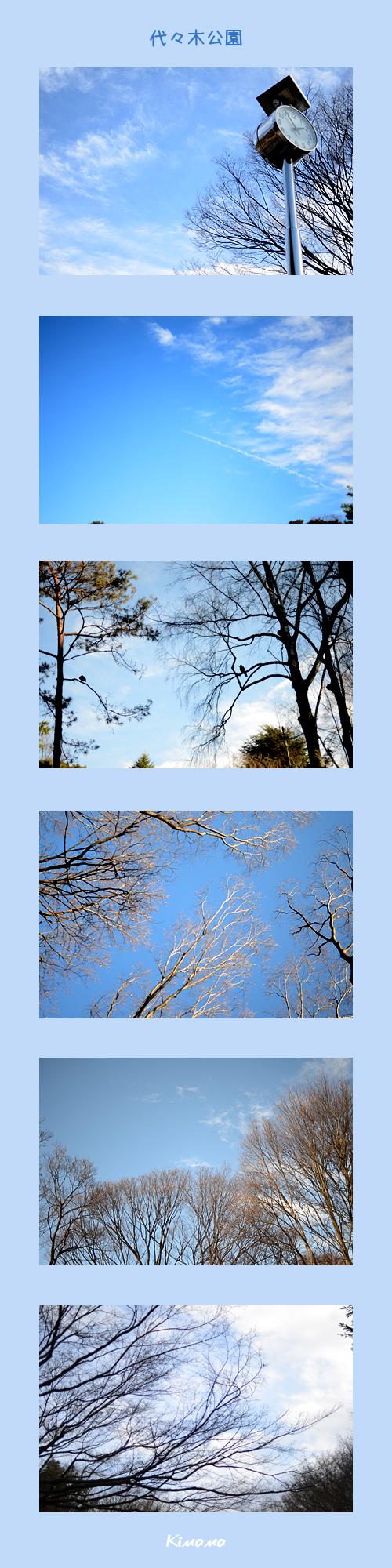 1月4日代々木公園1