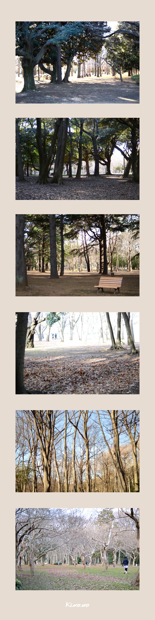 1月4日代々木公園2