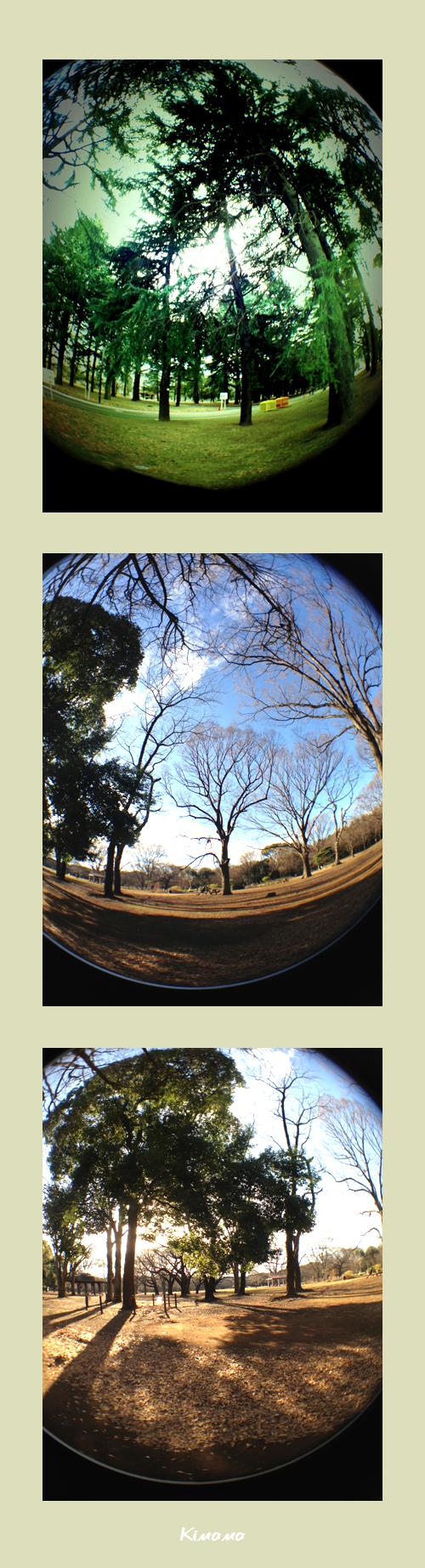 1月4日代々木公園3