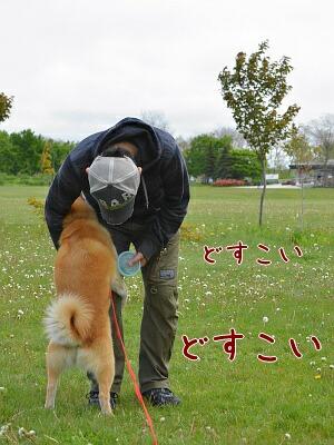 dosukoi_20120604101936.jpg