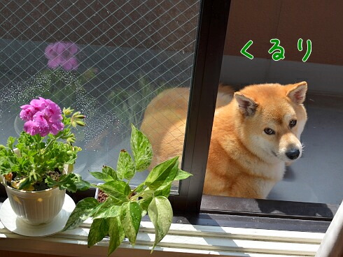 kururi_20120610190305.jpg