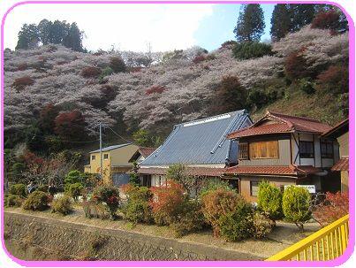 1118四季桜2 ブログ