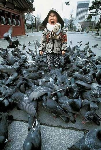 a_aaa-Attack-Of-The-Killer-Pigeons.jpg