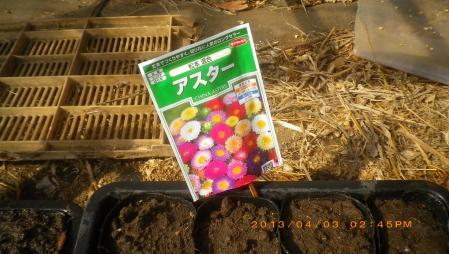 ポットに種まき (5)