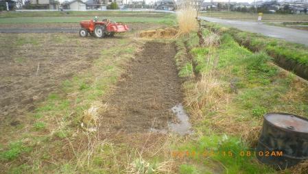 稲の苗床 (1)