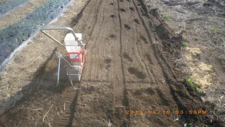 餅米の播種作業 (2)