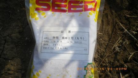 餅米の播種作業 (1)