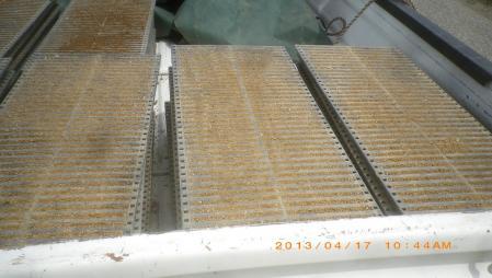 稲の播種作業 (7)
