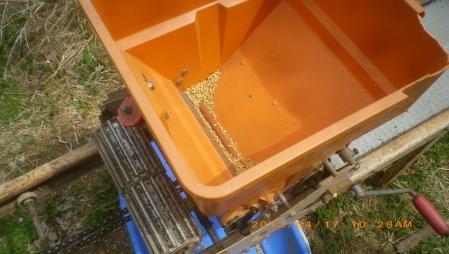 稲の播種作業 (6)