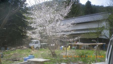 稲の播種作業 (4)