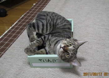 torahako1.jpg