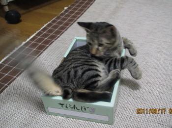 torahako4.jpg