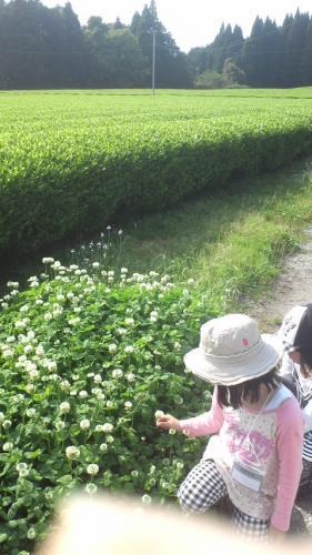 茶園と娘たち