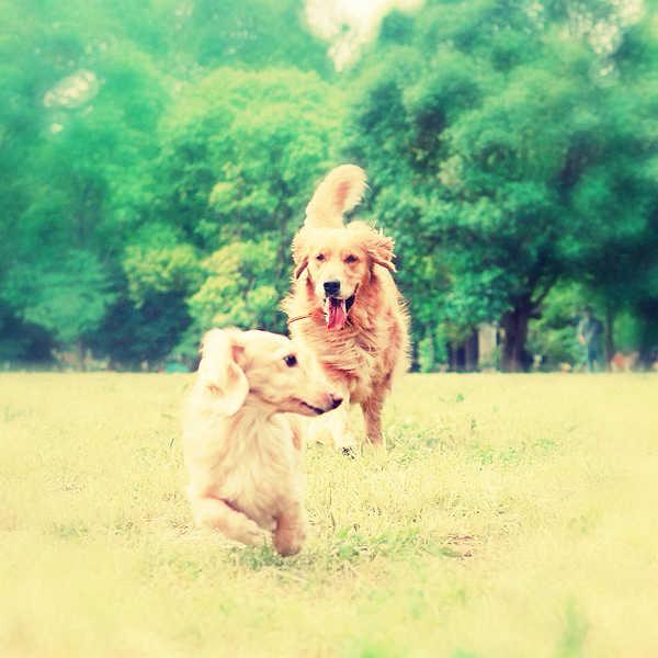 dog_run22